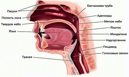 прибор против насморка и аллергии welss