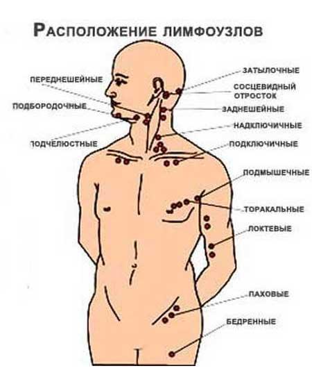 Как лечить лимфоузлы на шее у человека