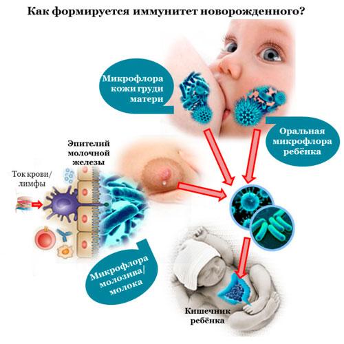 Формирование имуннитета у малыша
